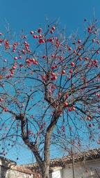 Giornate stressanti e rotondi frutti rossastri